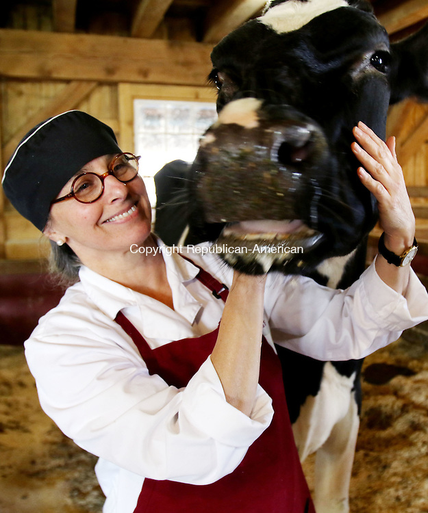 GOSHEN CT. 24 November 2015-112415SV10-Kimberly Thorn checks on one of the cows, &ldquo;Karissma&rdquo;, that gives her milk for chocolates she makes at Thorncrest Farm in Goshen Tuesday. <br /> Steven Valenti Republican-American