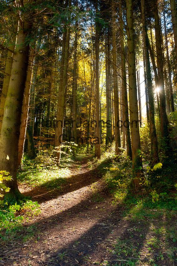 Deutschland, Bayern, Waldweg im Gegenlicht | Germany, Bavaria, forest track with backlight sun