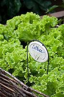 Quaint lettuce plant label in small organic raised bed garden
