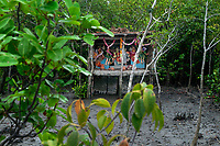 A temporary temple of Bonobibi inside the forest. Bonobibi is the goddess of Tigers. Nobody in Sunderban will dare to enter the jungle without worshiping her. This ritual is strictly followed by each and every men entering the forest. Sunderban, West Bengal, India. Arindam Mukherjee