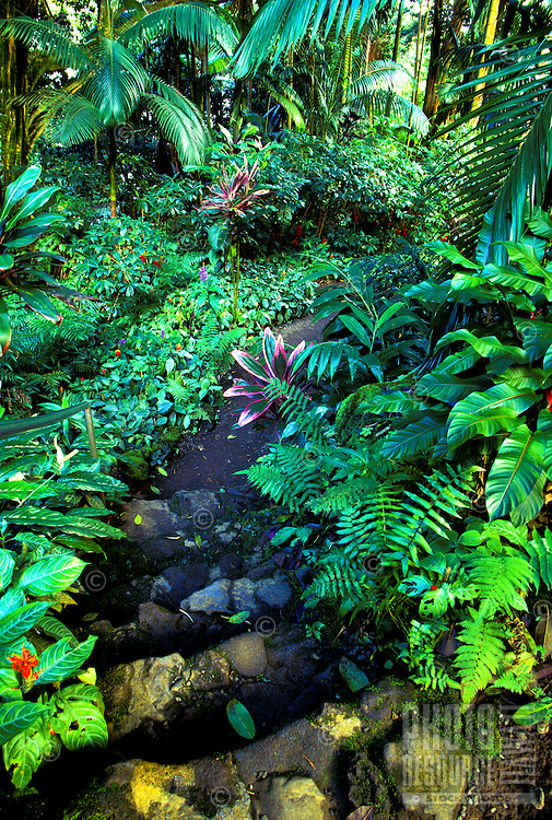 Pathway with tropical foliage at the Hawaii tropical botanical gardens