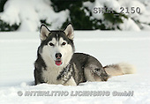 Carl, ANIMALS, wildlife, photos(SWLA2150,#A#)