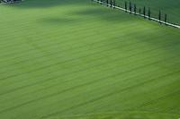 Feld, Acker, Monokultur, Fahrspur, Fahrspuren, Struktur, Grünland, intensive Landwirtschaft, Agrarsteppe, Muster. Field, monoculture, monocropping, structure, grassland, intensive agriculture, agricultural steppe, pattern
