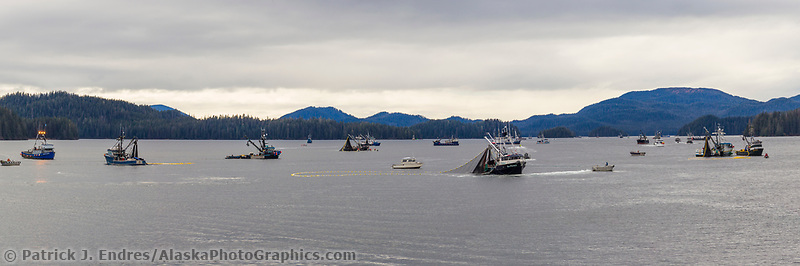Commercial fishing boats seine during the Sitka sac roe herring fishery, Sitka Sound, southeast, Alaska