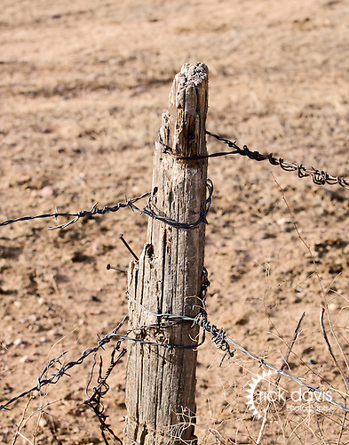 A cedar fence posts shows signs of ravages of the harsh environment of the Pawnee National Grasslands.