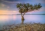 Mangrove, Antsiranana Bay, Antsiranana Province, Madagascar