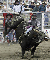 29 Aug 2004: Bull Rider Johnny Chavez rides the bull Hair Trigger during the PRCA 2004 Extreme Bulls compatition in Bremerton, WA.