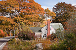 Fall color in Sedgewick, ME