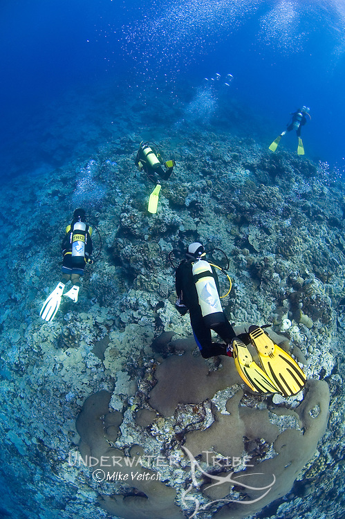 Divers swim along a reef, Yap, Federated States of Micronesia, Pacific Ocean