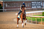 LOUISVILLE, KENTUCKY - MAY 01: Plus Que Prafit prepares for the Kentucky Derby at Churchill Downs in Louisville, Kentucky on May 01, 2019. Evers/Eclipse Sportswire/CSM