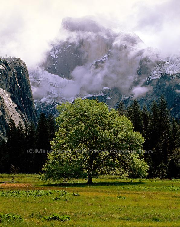 Half Dome Yosemite NP  CALIFORNIA