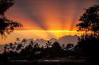 Orange sunset w/ silhouetted palm trees  in Kekaha, Kaua'i