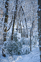 Winter Forest, Lumberton, New Jersey