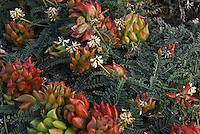 &quot;DUNE BOUQUET&quot;<br />