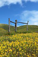 Central Valley California
