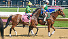Talk Show Man before The Cape Henlopen Stakes at Delaware Park on 7/11/15