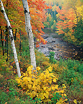 Pattison State Park, WI: View of the Black River flowing through a hardwood forest in fall color