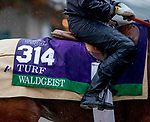 November 1, 2018: Waldgeist (GB), trained by Andre Fabre, exercises in preparation for the Breeders' Cup Turf at Churchill Downs on November 1, 2018 in Louisville, Kentucky. Carolyn Simancik/Eclipse Sportswire/CSM