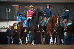 February 1, 2020: Max Player, ridden by Dylan Davis, wins the 2020 running of the Withers Stakes at Aqueduct Racecourse in South Ozone Park, NY on February 1, 2020. Sophie Shore/ESW/CSM