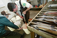 With the help of volunteer hatchery host Helen Ivie Oregon Department of Fish and Wildlife Rock Creek Fish Hatchery assistant manager John Schmitz harvests the eggs from a summer steelhead trout at the hatchery, on a tributary of the North Umpqua River Tuesday May 13, 2003. Hatchery employees also spawn salmon and other trout which the use to the lakes and streams of the North Umpqua River.