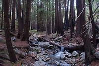 Limekiln Creek, Limekiln State Park, Big Sur, California, US