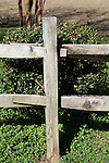 A holly bush stands behind a park fence post.