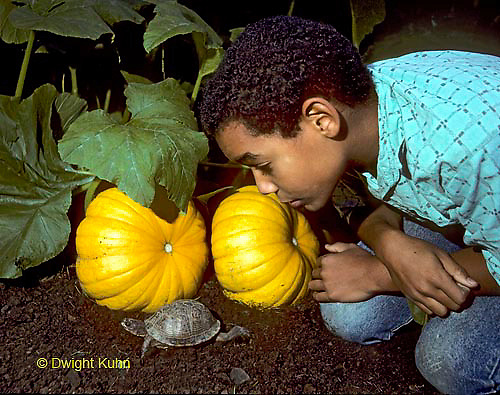 1R14-006z  Minority Child with Box Turtle in Garden.