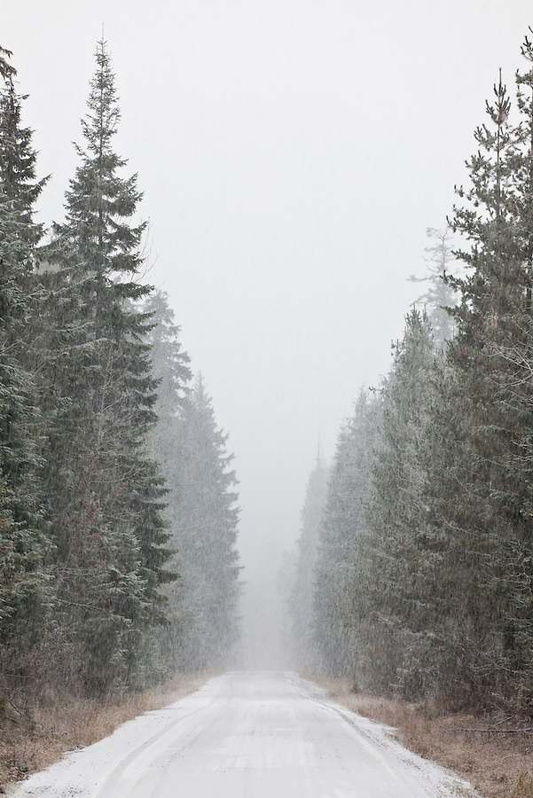A long snow-covered road through the forest during a snow storm.