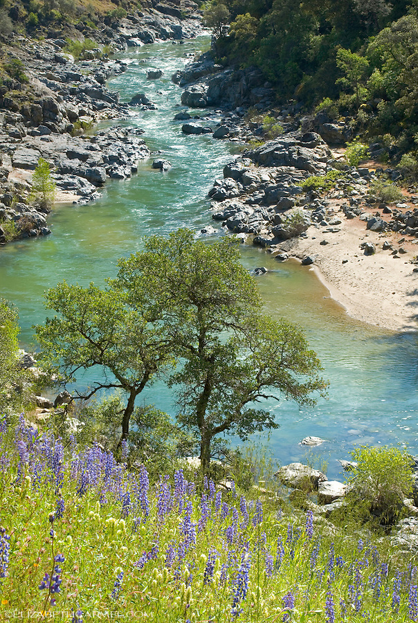 Yuba River in Spring