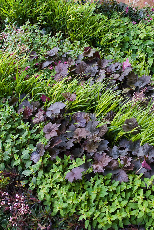 Heuchera and hakonechloa plant flower stock for Ornamental grass with yellow flowers
