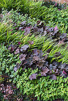 Hakonechloa ornamental grass gold yellow foliage with purple leaves of Heuchera Palace Purple for contrasts