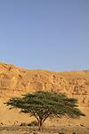 Israel, Arava, an Acacia tree near Moa