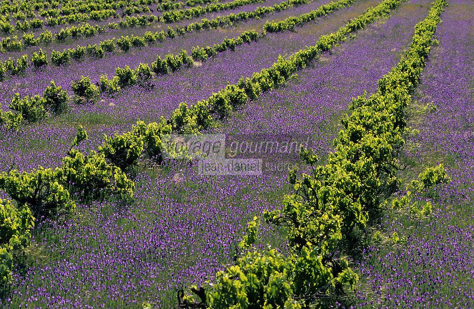 Océanie/Australie/South Australia/Australie Méridionale/Barossa Valley/Gomersal: Le vignoble