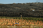 Eliah Ben Na'im, a settler, drives a tractor moving a load of olives from harvest to the oil press, next to the unauthorized Israeli outpost of Givat Achia, West Bank.