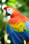 Costa Rica Animals