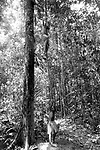 indios Tembés da aldeia Turé Mariquita no muncípio de Tomé Açú no Pará