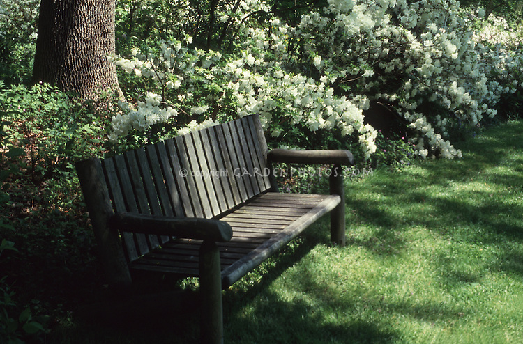 Wooden garden bench in shade against azaleas in spring