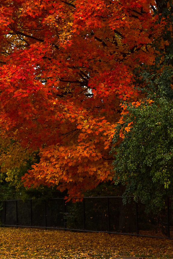 Images of fall colors as seen in Vernon Hills, Lake County Illinois