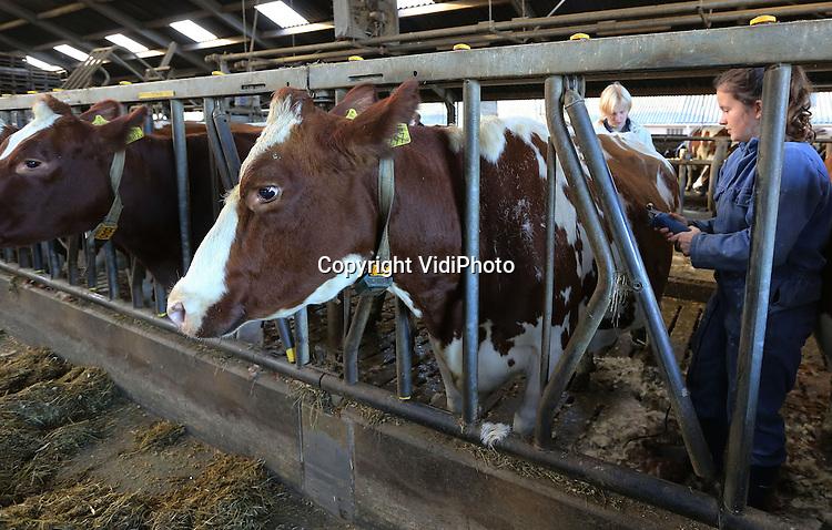 Foto: VidiPhoto<br /> <br /> BARNEVELD - Ook koeien moeten naar de kapper en wel op het moment dat ze definitief naar binnen gaan. Nu dus. Ruim 20 leerlingen van vierde klas van het vmbo De Meerwaarde in Barneveld, afdeling groen, scheren woensdag de honderd koeien van melkveehouder Mulder uit Barneveld. Ontdaan van hun overtollige haren, kunnen de koeien dan beter hun warmte kwijt, worden ook parasieten weggehaald en is een geschoren koe het beter voor de hygi&euml;ne tijdens het melken. Tijdens de praktijkles &quot;groen is doen&quot; leren de leerlingen niet alleen de techniek van het scheren, maar ook het omgaan met de dieren.