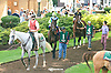 Set to Music before The Cape Henlopen Stakes at Delaware Park on 7/11/15
