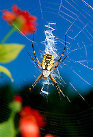 Spiders: Artistry and competency