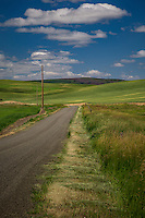 A farmroad in the Palouse. The Palouse Is a region of where there are no continuous valleys, and the hills do not connect to make long ridges. These hills were not created by rivers and streams, as is most of our landscape, but formed more like sandunes, with winds depositing silt to form of some of the most fertile soil in the country.