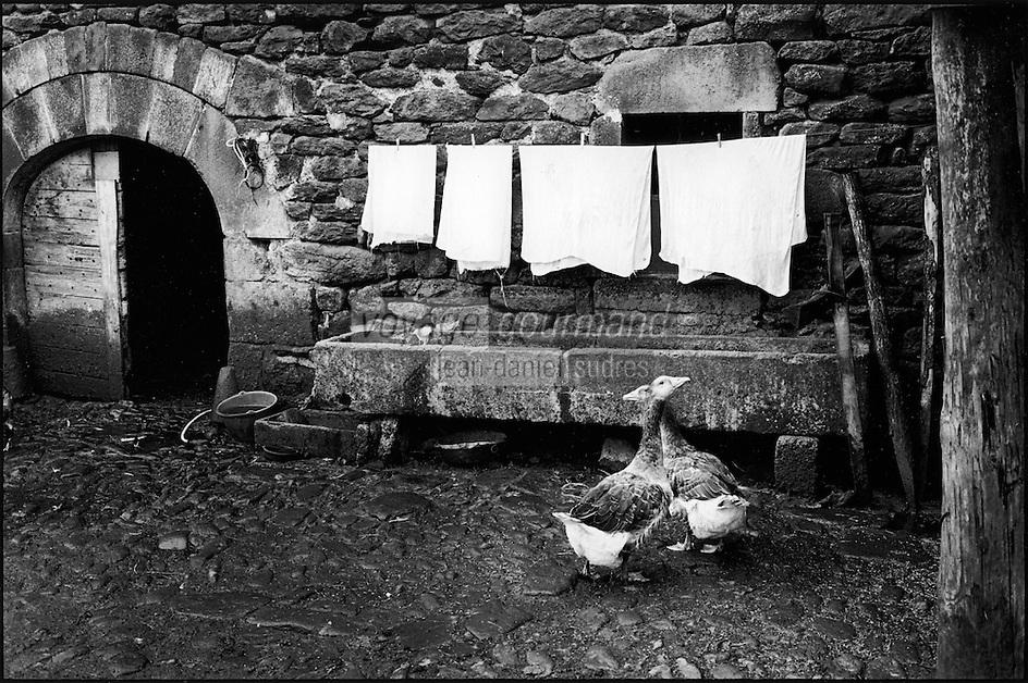 Europe/France/Auvergne/15/Cantal/Cussac : Linge séchant à la laiterie des frères Salat - Fabrication de Cantal Salers - Parc Naturel Régional des Volcans d'Auvergne