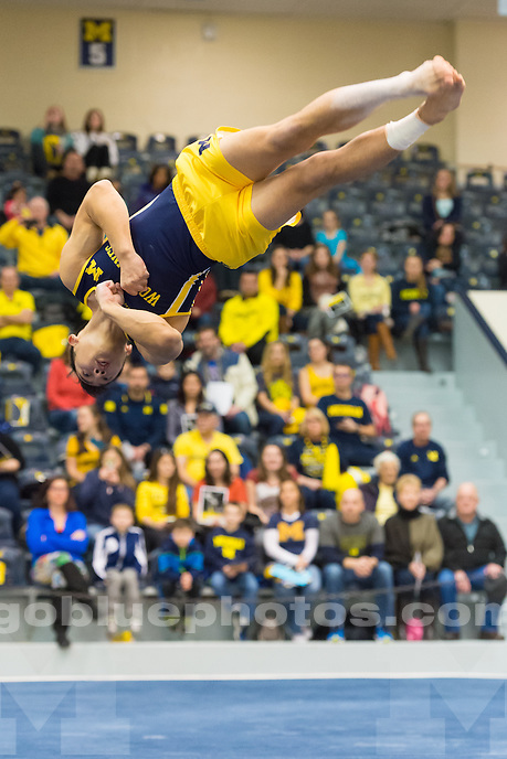 The University of Michigan men's gymnastics team, 434.9 - 424.1, loss to OSU at Cliff Keen Arena in Ann Arbor, Mich., on Jan. 30, 2016.