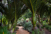 View from under Rhopalostylis sapida, Nikau Palm trees into New Zealand section of San Francisco Botanical GardenSan Francisco Botanical Garden
