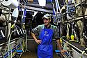 20/05/14 - MARCILLY LE CHATEL - LOIRE - FRANCE - GAEC des Gaulois de la famille Chazal. Pierre jean en salle de traite - Photo Jerome CHABANNE