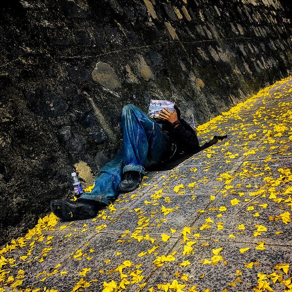 A Salvadoran homeless man lies on the sidewalk covered with yellow petals on the street in San Salvador, El Salvador, 24 November 2018.