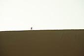 Ica, Peru. Sand boarder walks along ridge at top of sand dune with sand board. No MR. ID: AL-peru.