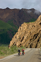 Bicycle riders on the Denali park road near the Toklat river, Denali National Park, Interior, Alaska.
