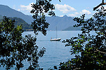 A small white sailboat on Lake Como, Italy framed by tree branches; view from Varenna.